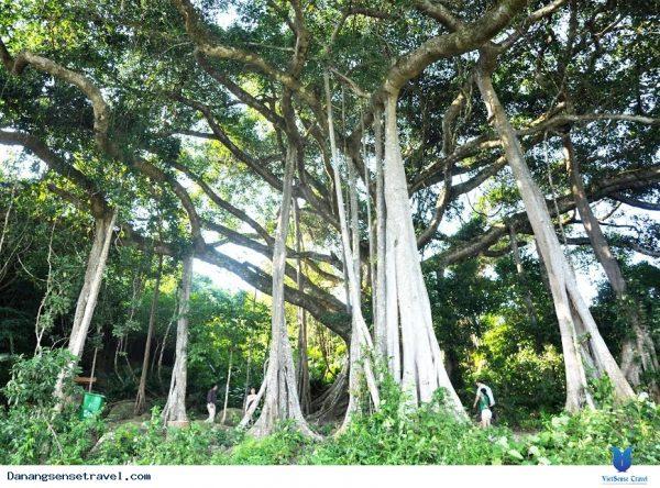 cây đa ngàn năm du lịch vạn người mê