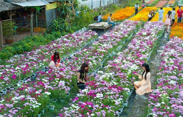 làng hoa truyền thống hải phòng