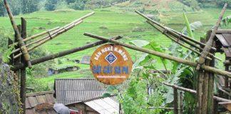 Bản Cát Cát điểm du lịch Lào Cai